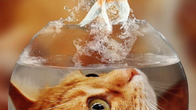 cat cashing a fish